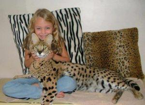 фото девочки с кошкой саванна