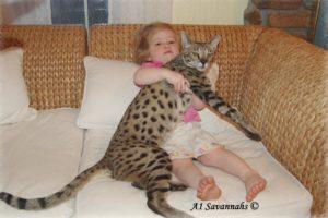 маленькая девочка с кошкой породы саванна