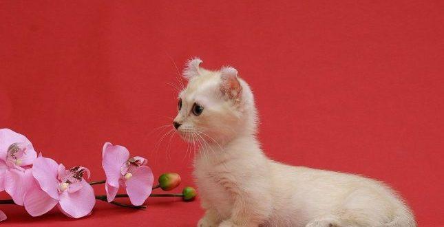 Мини кошки породы фото