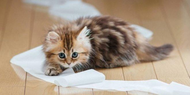 Как воспитывать котенка: советы по воспитанию котят