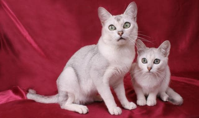 кошка с котенком фото
