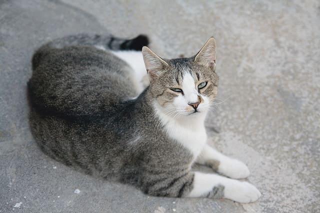 фото кошки