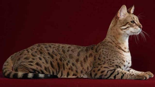 фото ашера кошки