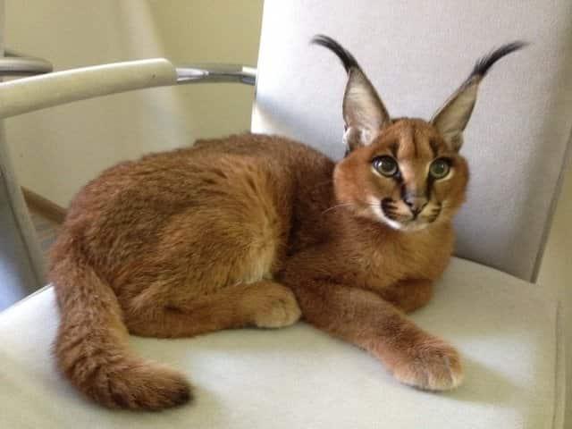 фото кошки на стуле