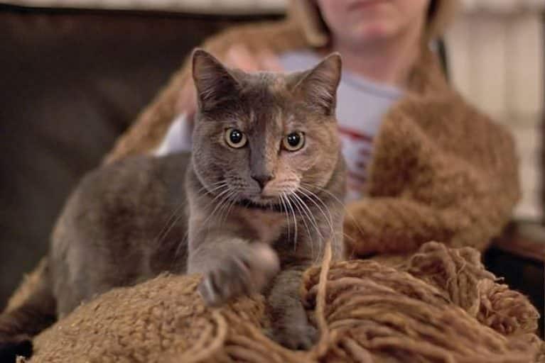 почему коты топчут нас лапками