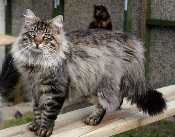 фото большого кота