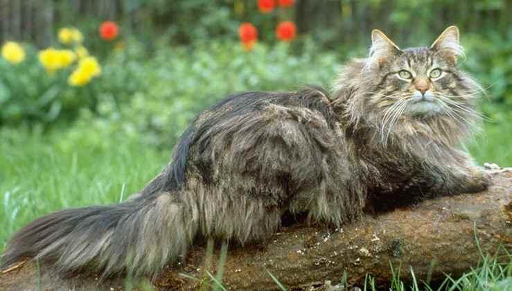 кошка на природе фото