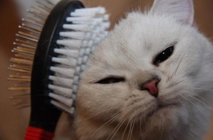 кошка линяет